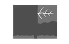 Agencia de Marketing Digital en Cancún  - Mapla Logo - Iddeas Mkt Creative